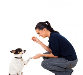 dog trainer working with a dog
