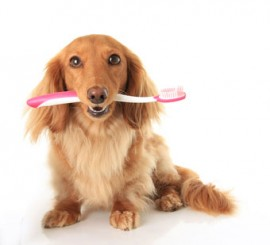 doggie dental care