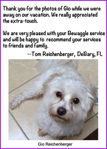 Pet sitter in DeBary
