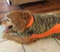 ThunderShirt Review