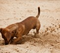 Does Your Dog Have a Digging Problem?